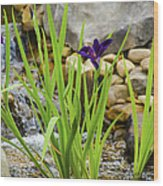 Purple Irises Growing In Waterfall Wood Print