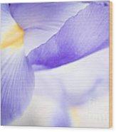 Purple Irises Wood Print