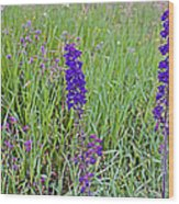 Purple Larkspur In A Meadow In Yellowstone National Park-wyoming Wood Print