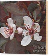 Purple Leaf Sand Cherry Burst Wood Print
