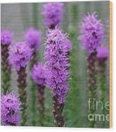 Purple Liatris Flowers Wood Print