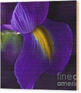 Purple Light Iris Macro Wood Print