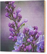 Purple Lilacs Wood Print