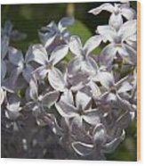 Purple Lilacs II Wood Print