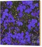 Purple Lobelia Wood Print