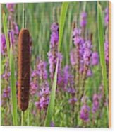 Purple Loosestrife And Cattail Plants Wood Print