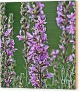 Purple Loosestrife Wood Print