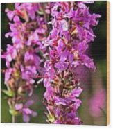 Purple Loosestrife Tall Wood Print