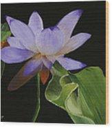 Purple Lotus Wood Print