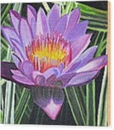Purple Lotus With Striped Foliage Wood Print