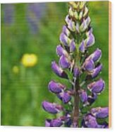 Purple Lupine Flower Wood Print
