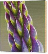 Purple Lupine Macro Wood Print