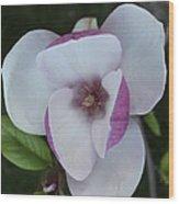 Purple Magnolia Wood Print
