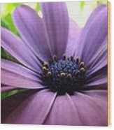 Purple Mexican Flower Wood Print