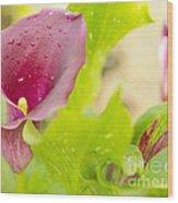 Purple Mini Calla Lily On A Sea Of Green Wood Print