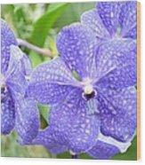 Purple Mokara Orchid Wood Print