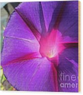 Purple Morning Glory - Flower Wood Print