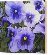Purple Morning Glory Wood Print