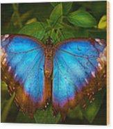 Purple Morpho Butterfly Wood Print
