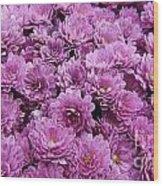 Purple Mums Wood Print