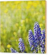 Blue Muscari Mill Bunches Of Grapes Close-up  Wood Print
