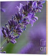 Purple Nature - Lavender Lavandula Wood Print