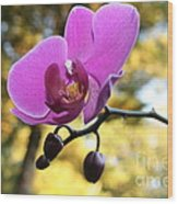 Purple Orchid In September Sun Wood Print