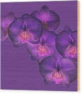 Purple Orchid On Purple Wood Print