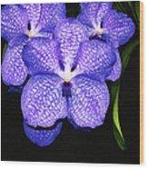 Purple Orchids - Flower Art By Sharon Cummings Wood Print