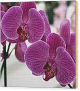 Royal Orchids  Wood Print