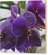 Purple Orchids Wood Print