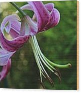 Purple Oriental Tiger Lily Wood Print