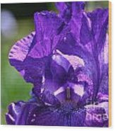 Purple Pandora Wood Print