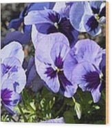 Purple Pansies Wood Print