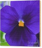 Purple Pansy Closeup Wood Print