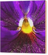 Purple Pansy Detail Wood Print