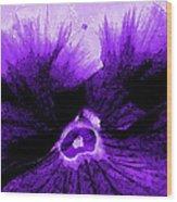 Purple Pansy Rising Wood Print
