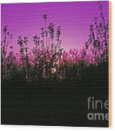 Purple Paradise Sunset By Diana Sainz Wood Print