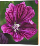 Purple Hollyhock Wood Print