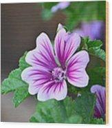 Purple Passion Wood Print by Jennifer  King