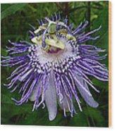 Purple Passionflower Wood Print