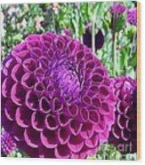 Purple Perfection Dahlia Flower Wood Print