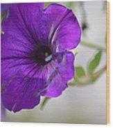 Purple Petunia 2013 Wood Print