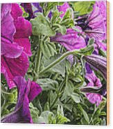 Purple Petunias Wood Print