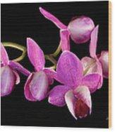Purple Phal Wood Print