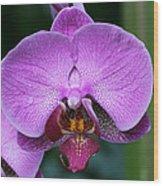 Purple Phalaenopsis Orchids Wood Print