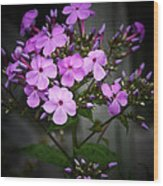 Purple Philox Wood Print