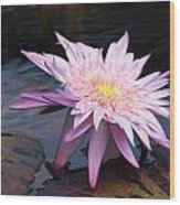 Purple Pink Yellow Waterlily... Wood Print