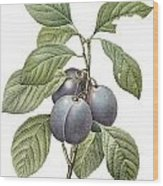 Purple Plum Wood Print