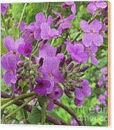 Purple Popping 2 Wood Print
